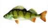 Perch Fishing Lures